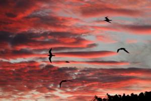terns at sunset