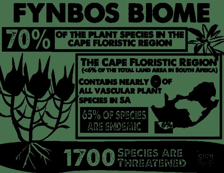 FynbosInfo