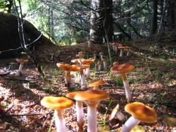 Mushroom_Forest