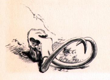 mammoth drawing